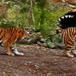 MitzieherAufnahme Tiger
