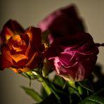 MIWOBLÜ 03.03.2021  die Königin , eine Rose