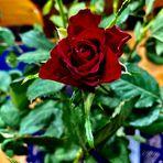 MIWOBLÜ 24.02.2021 Leuchtende rote Rose