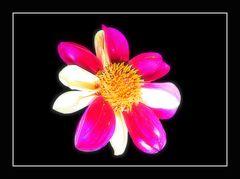 Miwoblü pink-weiß