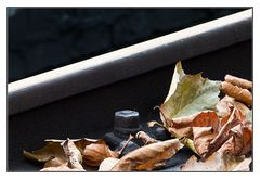 MiWoMu im Herbst