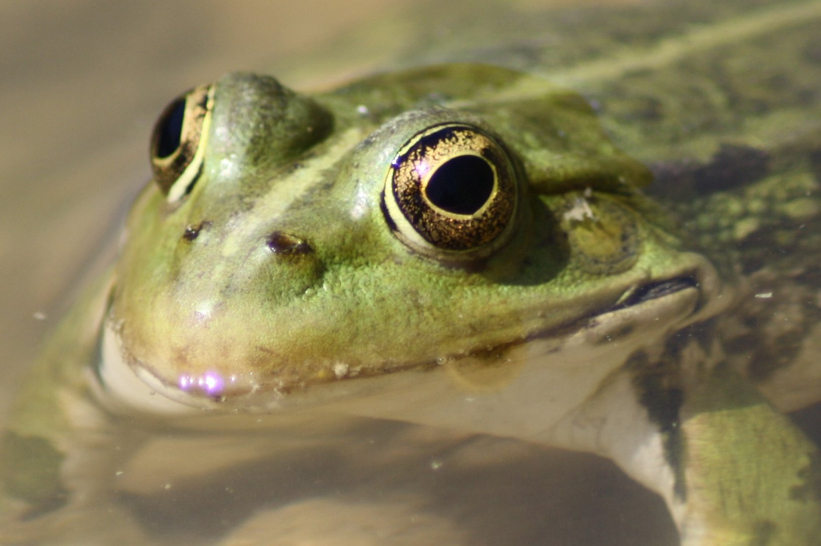 mlle grenouille