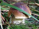 MMhh! le bon champignon