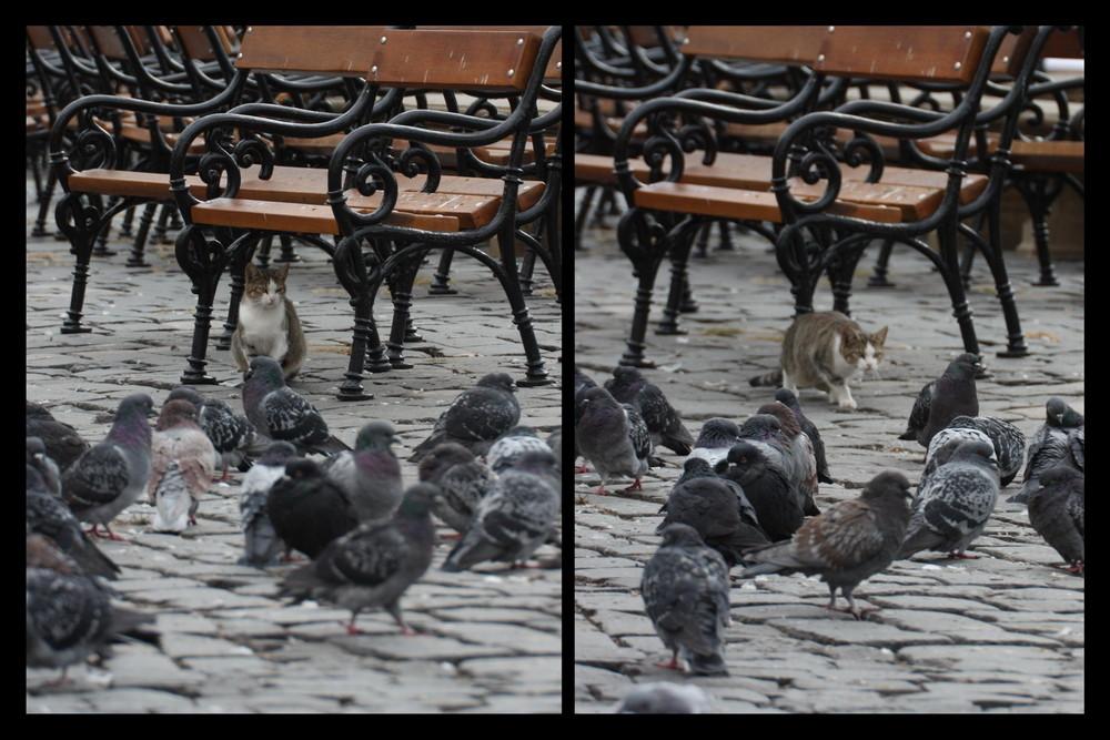 Mmmm, lecker so eine Taube