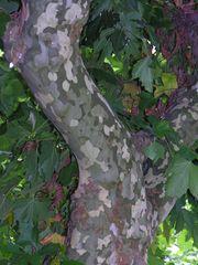 Moderner Baum im Militärlook