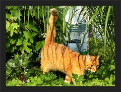 Möchtegern - Tiger