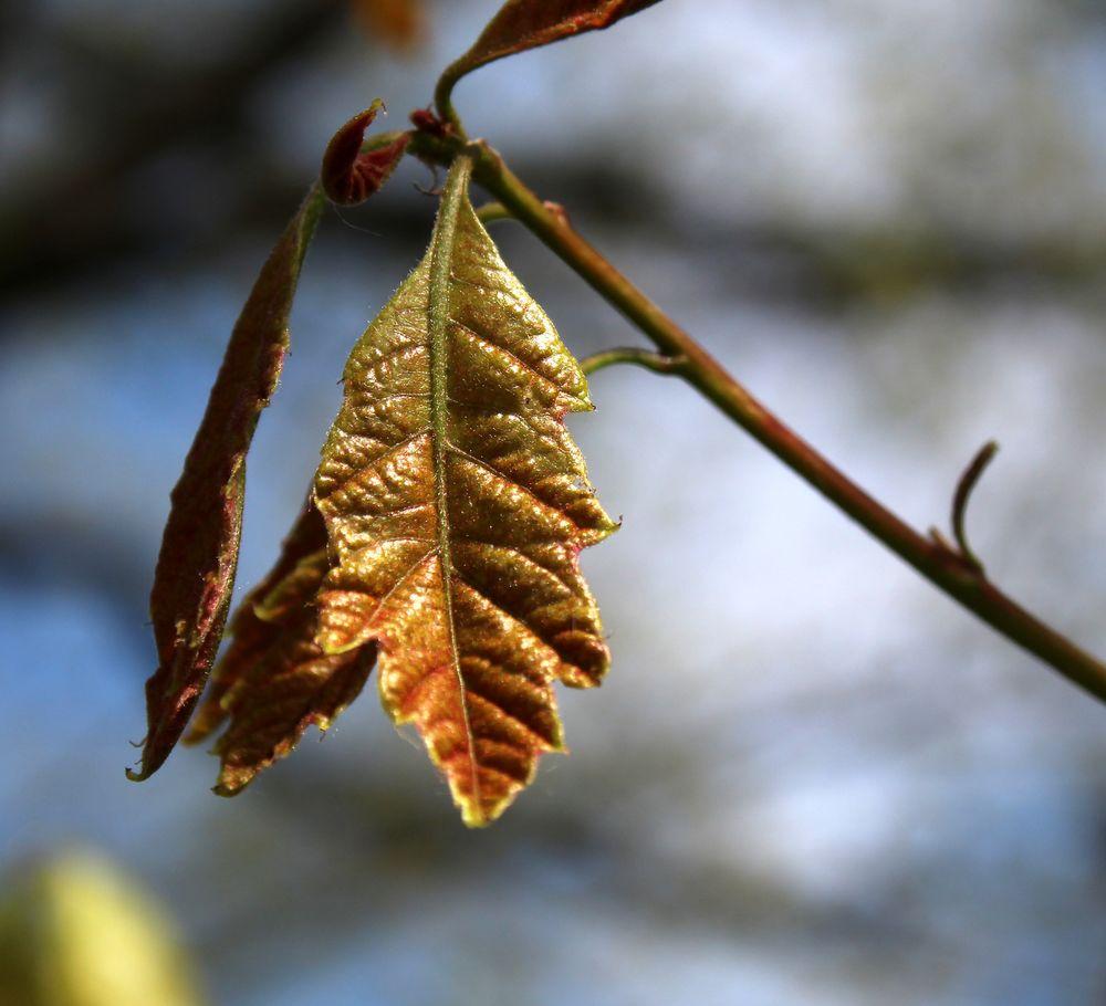 möge der goldene Oktober schöne Tage bringen