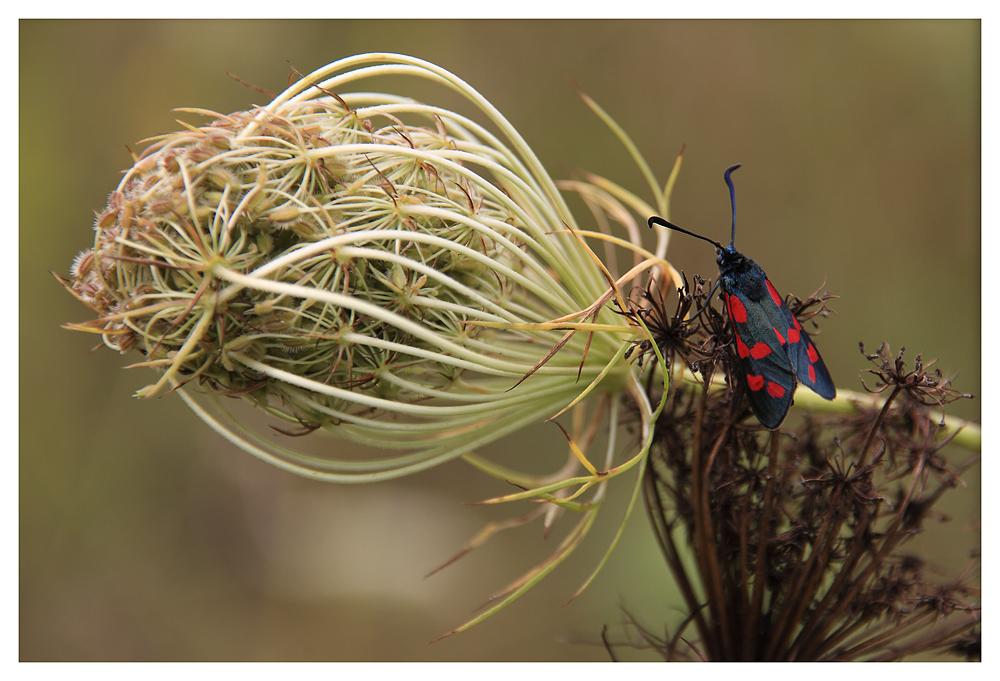- Möhre + Insekt -