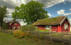 Mönsteras / Schweden