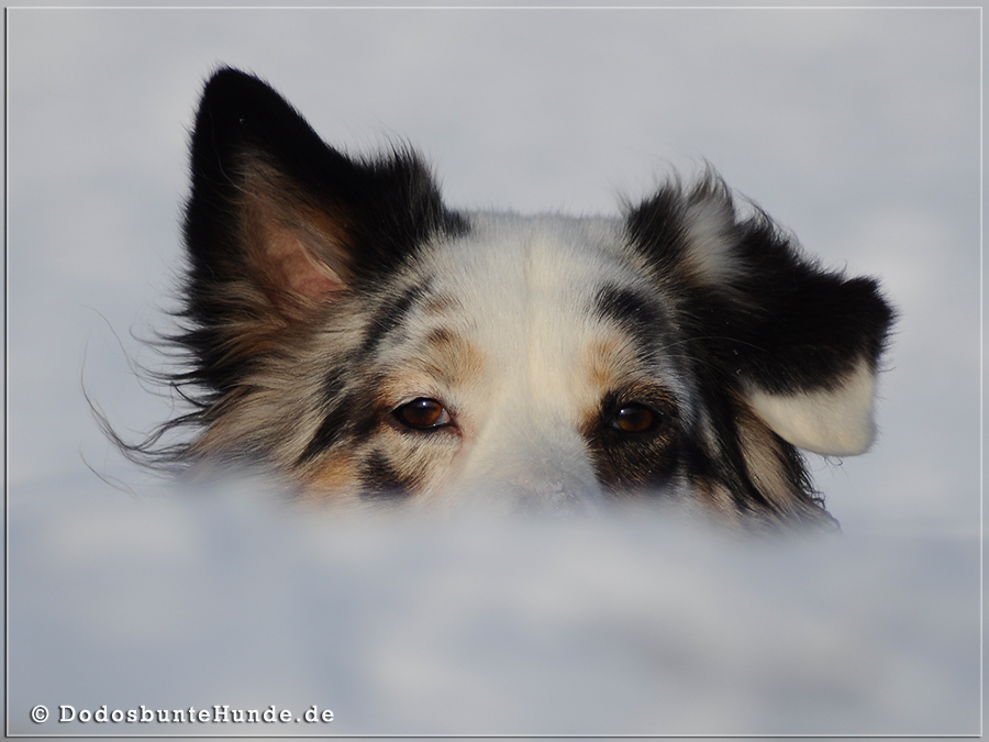 Möppi im Schnee