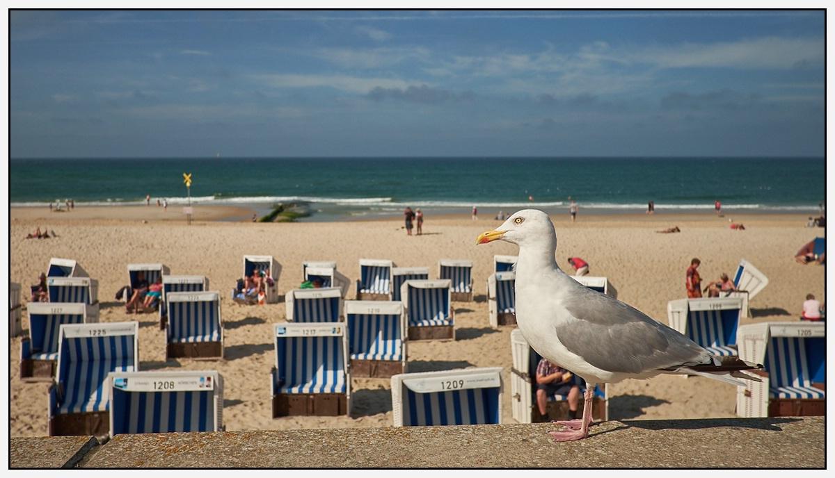 Möve am Strand