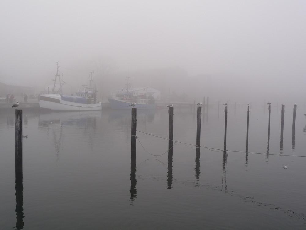 Möven am Hafen
