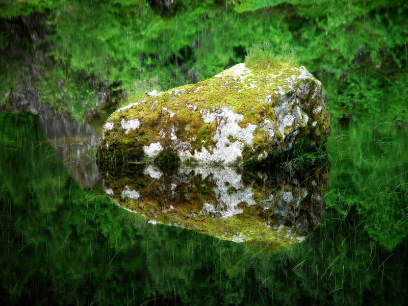 Möwe auf Stein