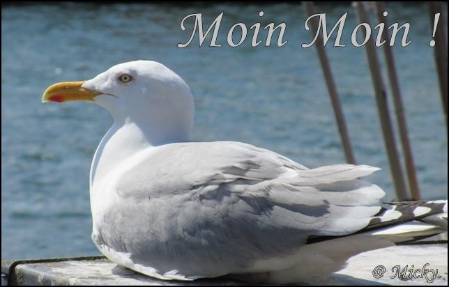 Möwe aus Heiligenhafen _2732 (69)