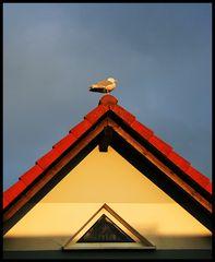 Möwe im grafischen Dachgiebel