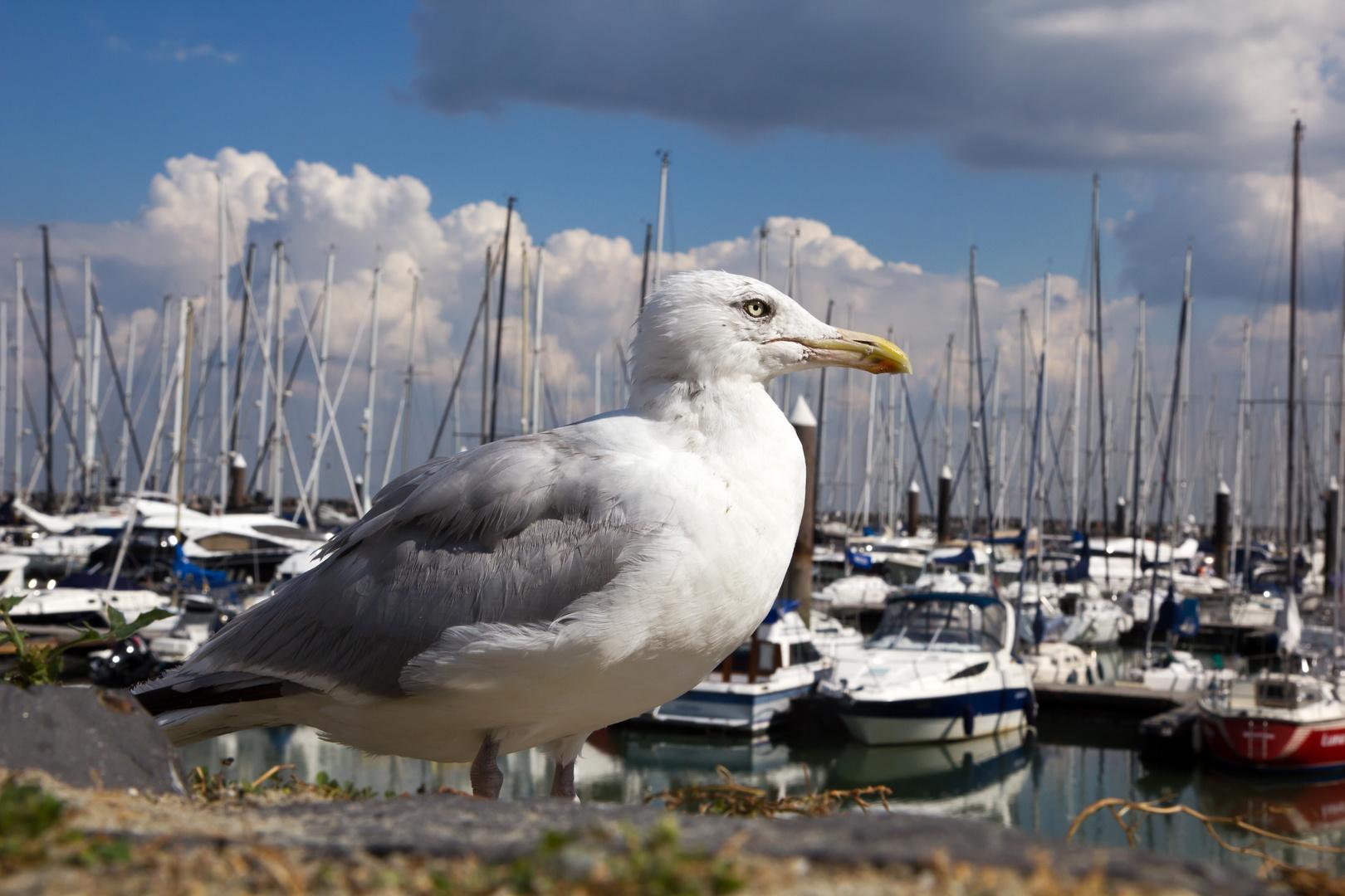 Möwe im Yachthafen
