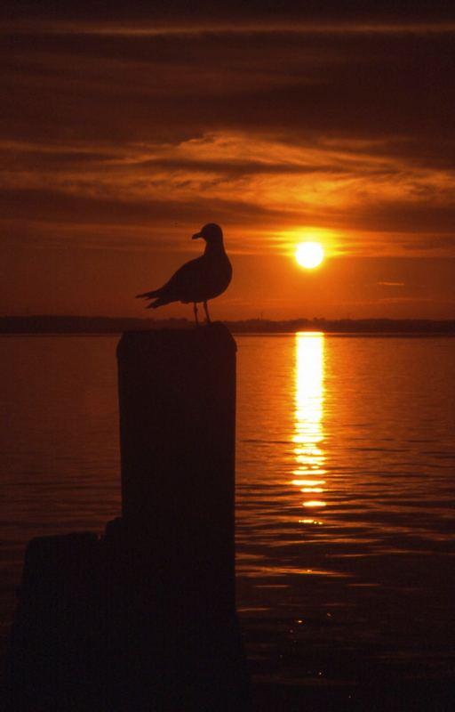 Möwe in der Abendsonne