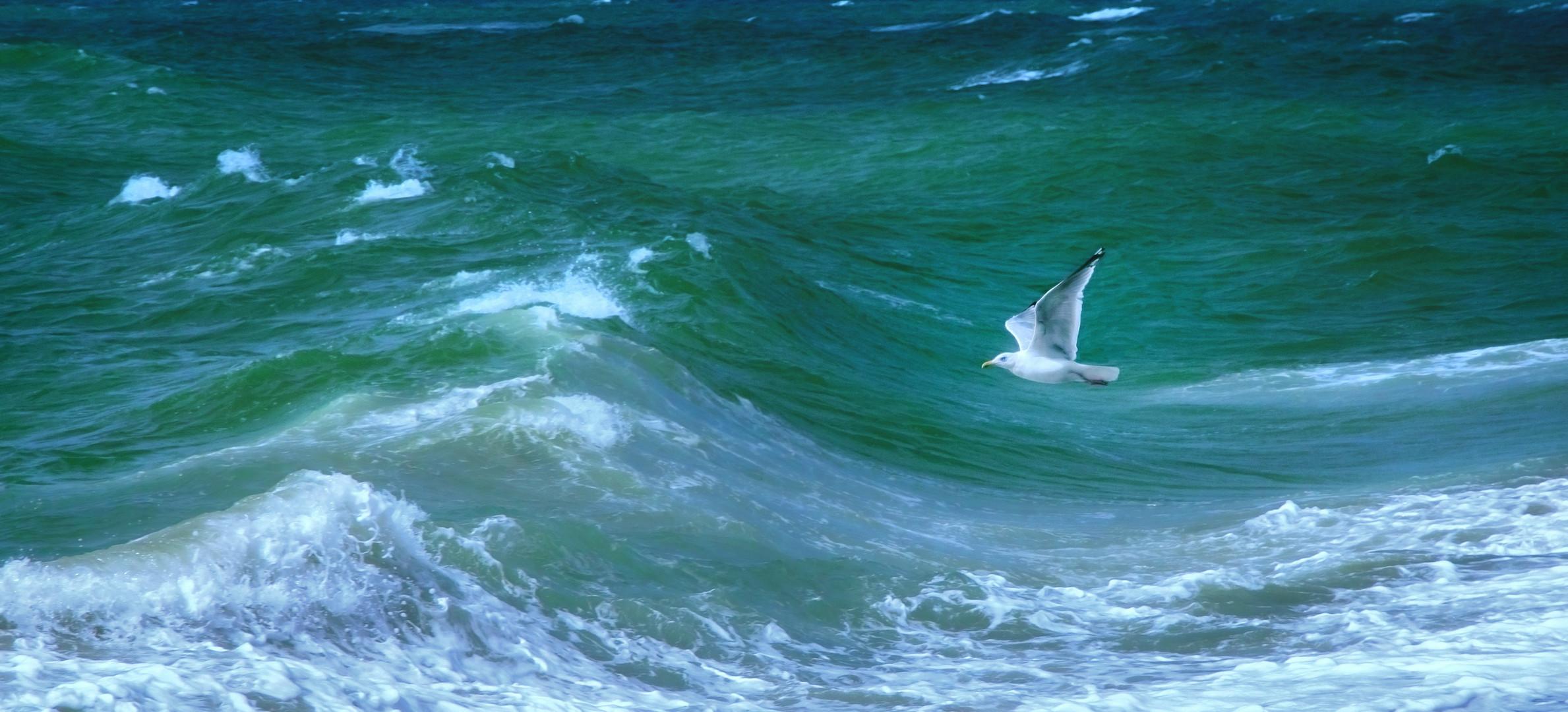 Möwe Vogel Meer Natur Wasser