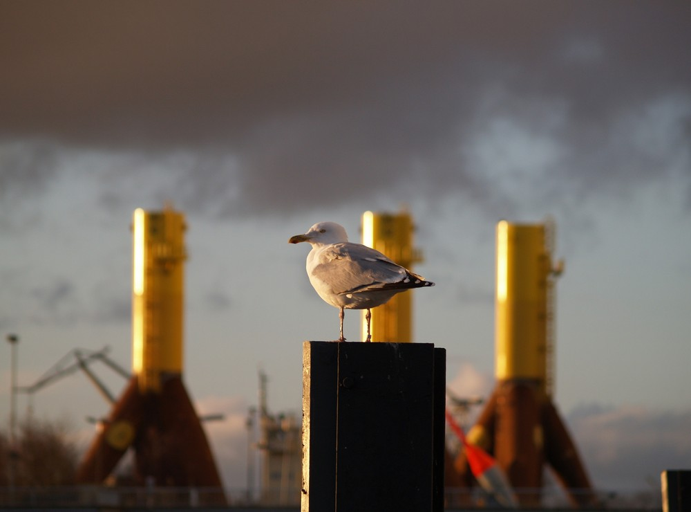 Möwe vor Windkraftanlagenfundamenten