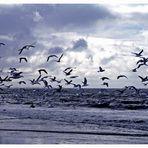Möwen am Meer