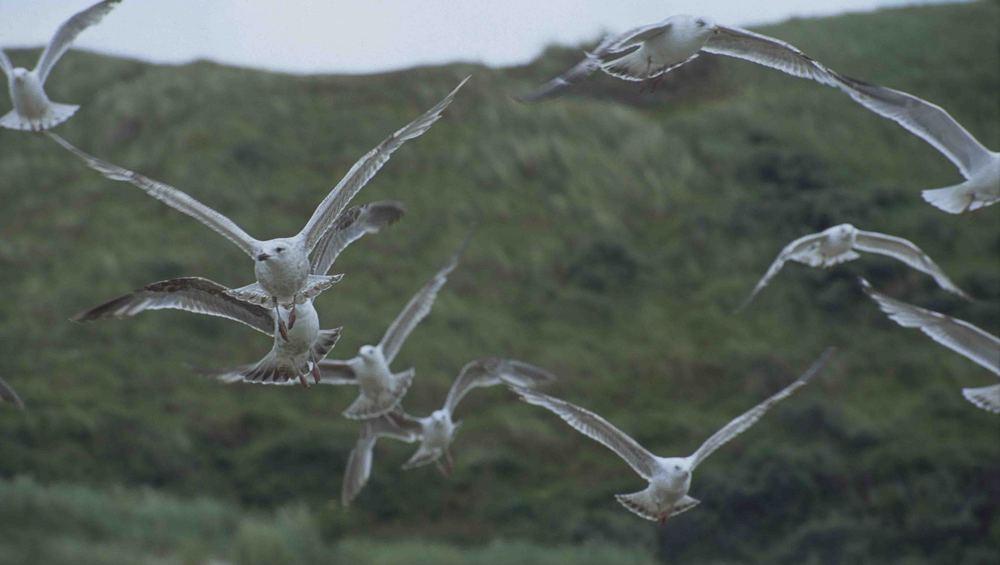 Möwen an der Nordseeküste Herbst 2004