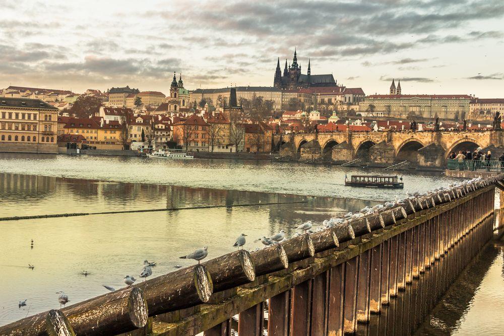 Möwen in Prag [4]