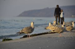 Möwen Treff am Strand