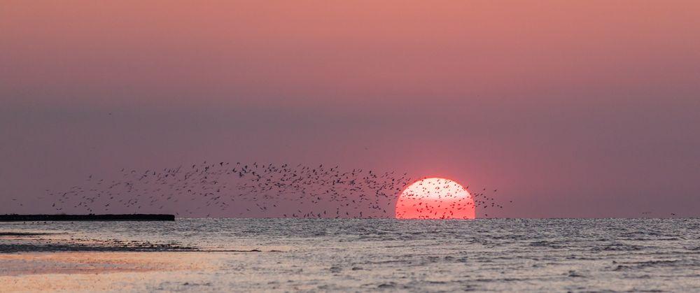 Möwenschwarm vor untergehender Sonne