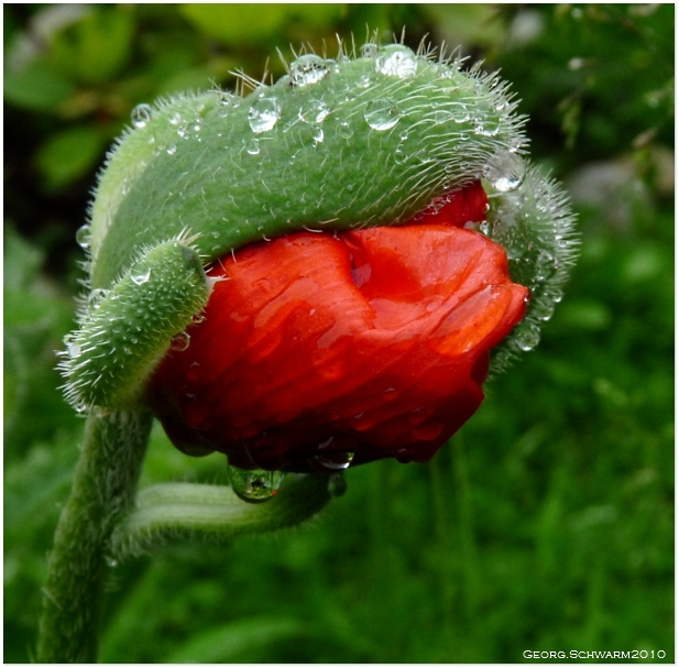 Mohn and Water!