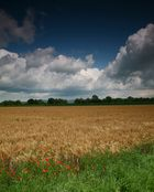 mohn-korn-wolken