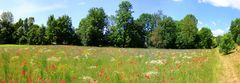 Mohn und mehr - Panorama