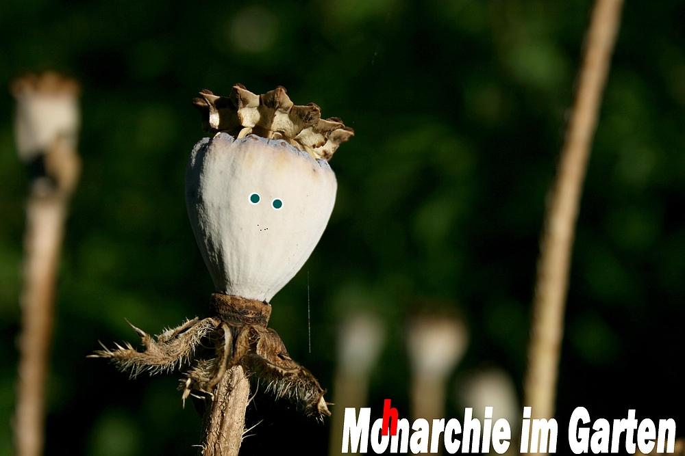 MoHnarchie im Garten