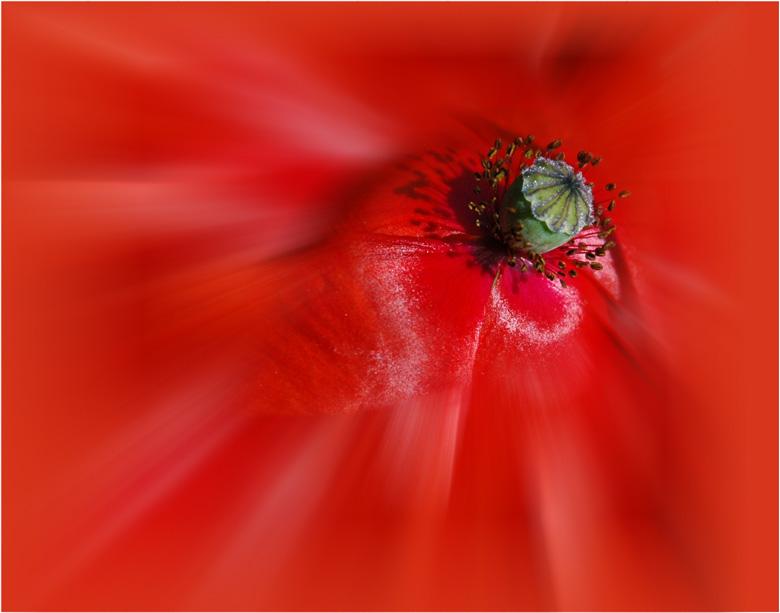 Mohnblüte abstrakt bearbeitet