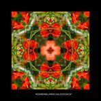 Mohnenblumen-Kaleidoskop