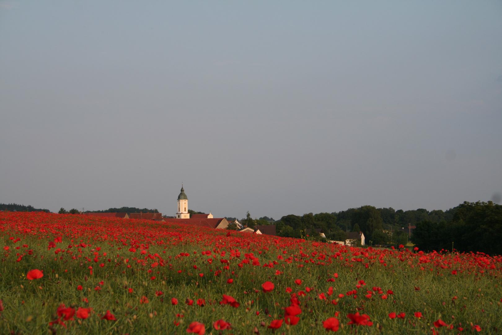Mohnfeld am Ortsrand