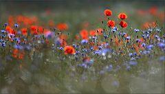 Blumen, Pflanzen