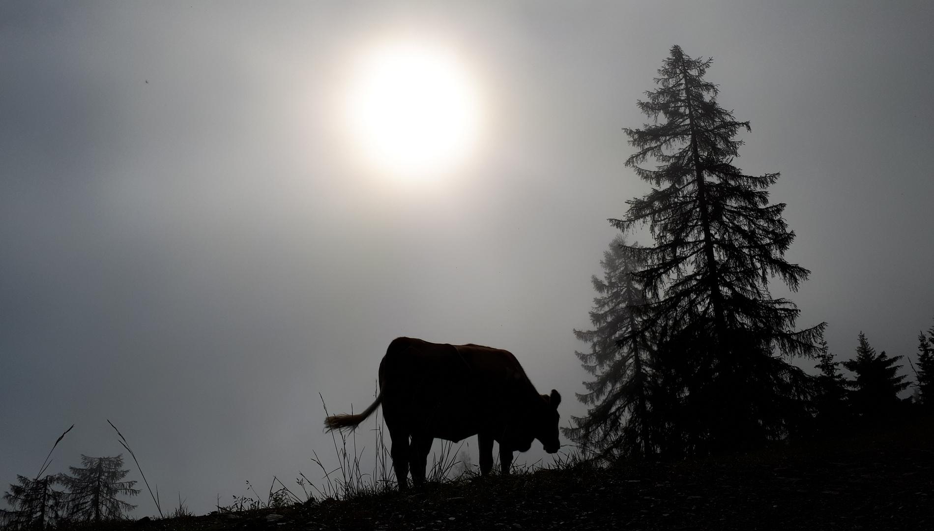 Moin Moin, liebe Kuh!  ;-))