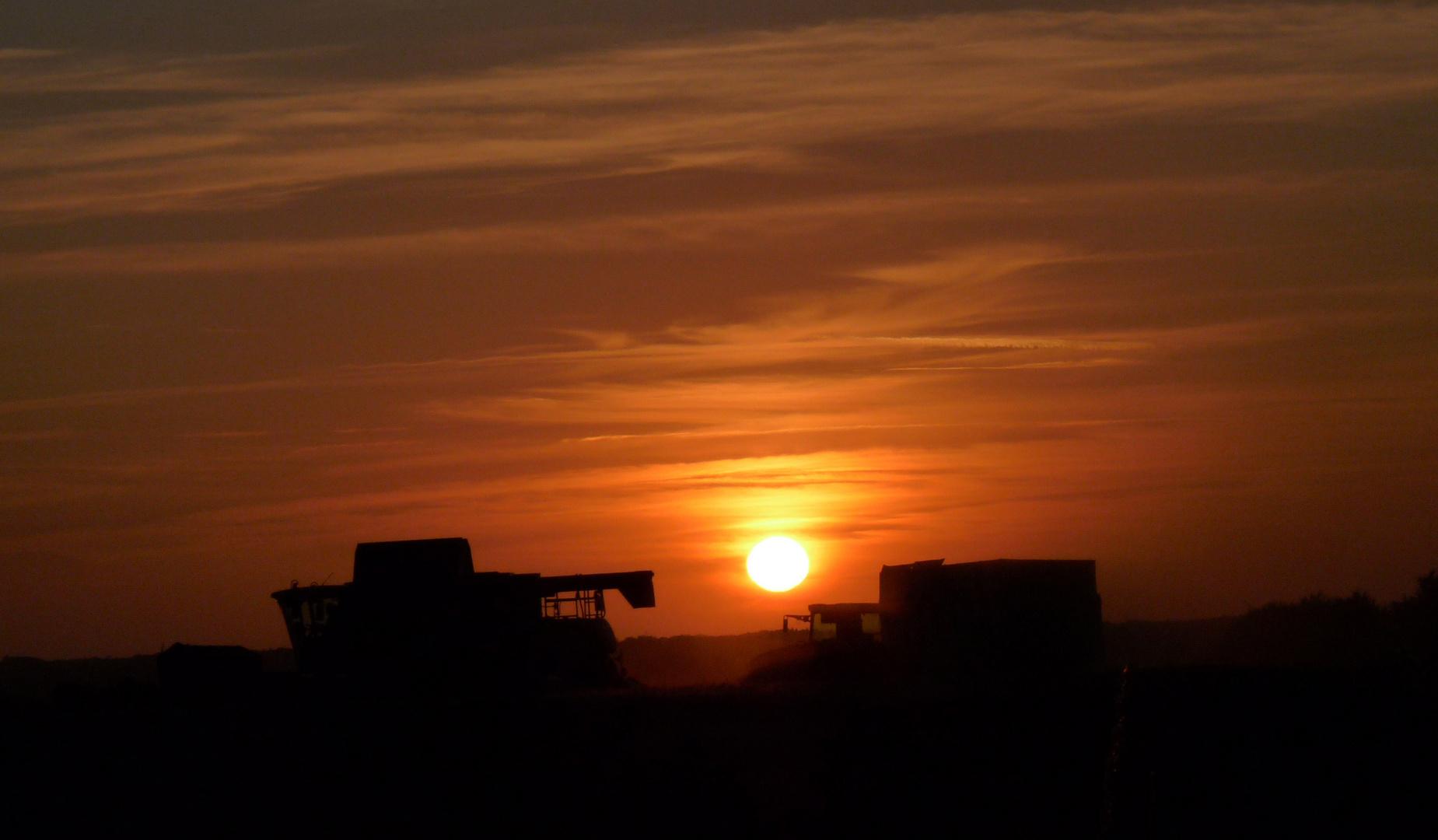 Moissonneuses-Batteuses au soleil couchant.