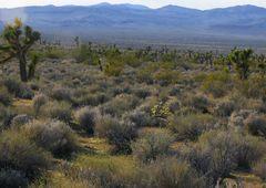 Mojave Scape 1