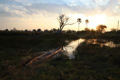 Mokoro in der Morgensonne