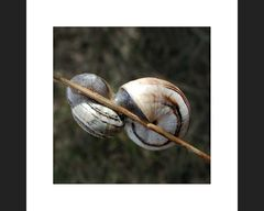 Mollusken-Tête-à-tête
