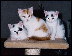 Molly, Moritz und Bonnie.