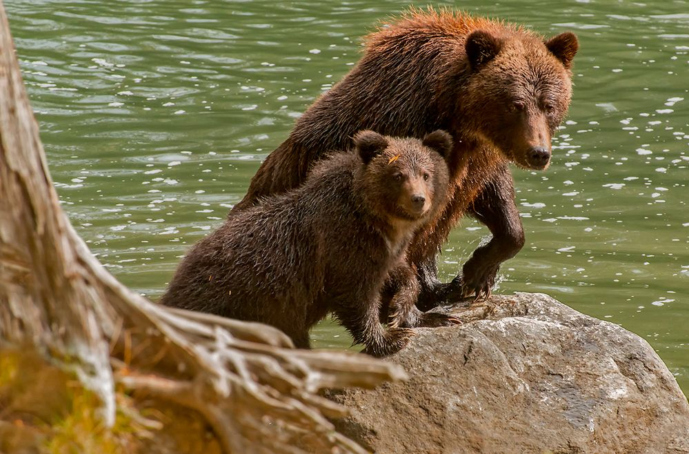 mom and her cub
