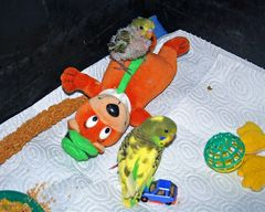 momme : huhu das ist mein teddybär  -  ashnak und das auto ist mein
