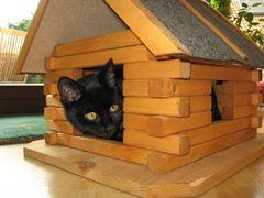 Momo zieht ins Vogelhaus