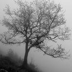 mon arbre dans le brouillard