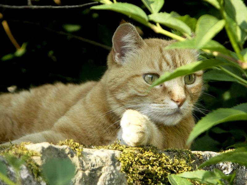 Mon chat 01