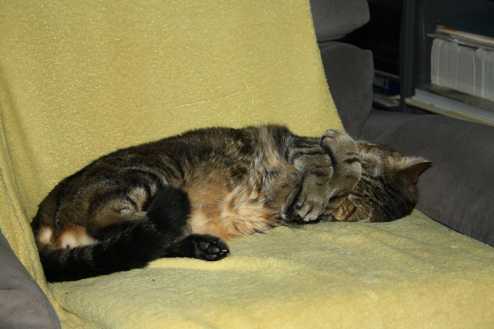 Mon chat Ulysse