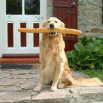 mon chien et mon baguette