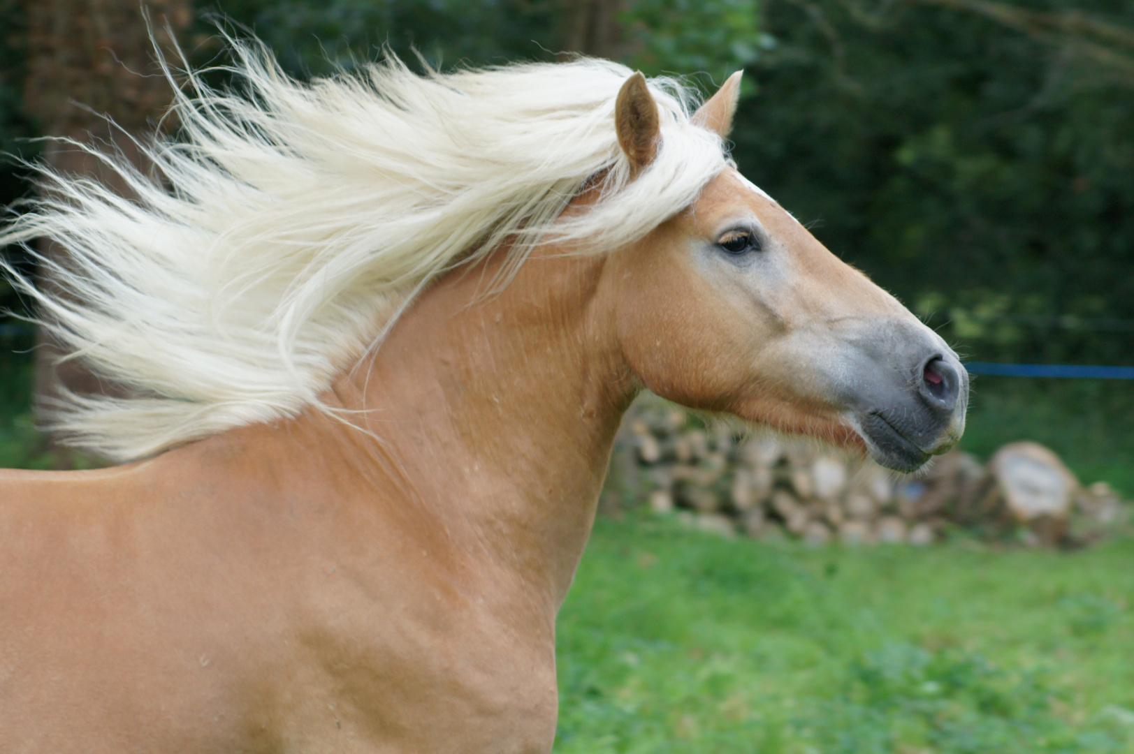Mon poney, Atlas, 3 ans